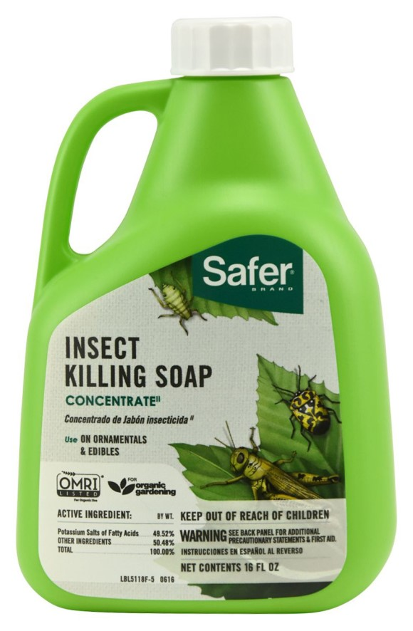 Safer Insect Killing Soap II Conc.