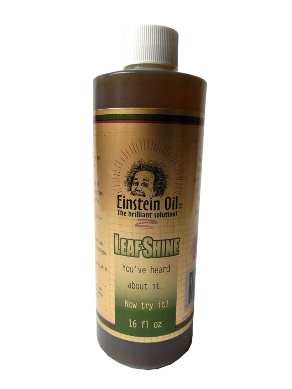 Einstein Oil, 16 oz